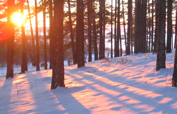 sunsettrees350x225.png